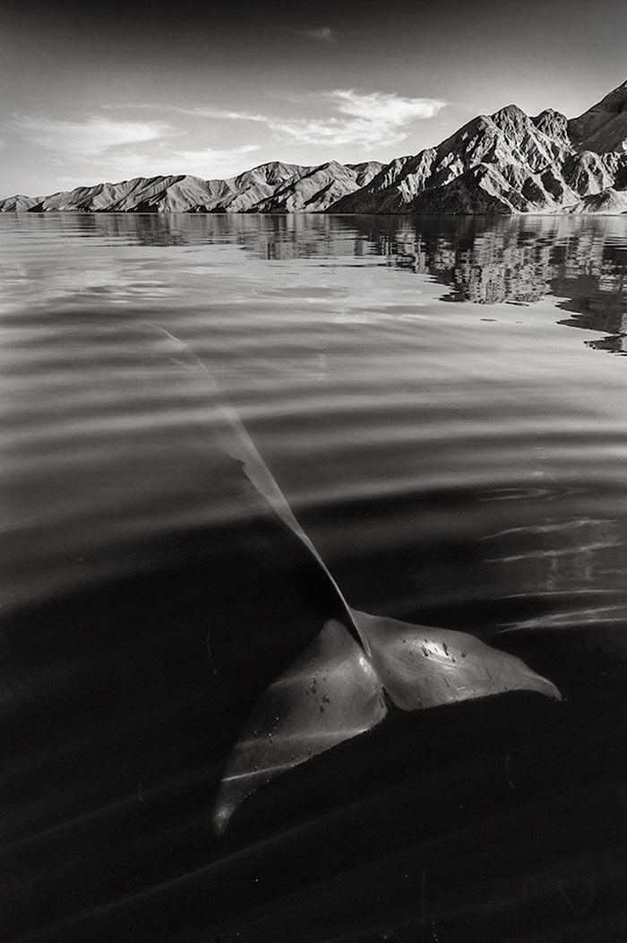 Christopher Swann has spent over 25 years taking majestic photographs of whales and dolphins, and as you can see from these beautiful pictures, the British photographer and cetacean enthusiast clearly has an intimate bond with these awe-inspiring marine mammals.