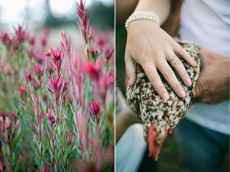 Engagement session. Some fynbos and farm animals brighten up the photos