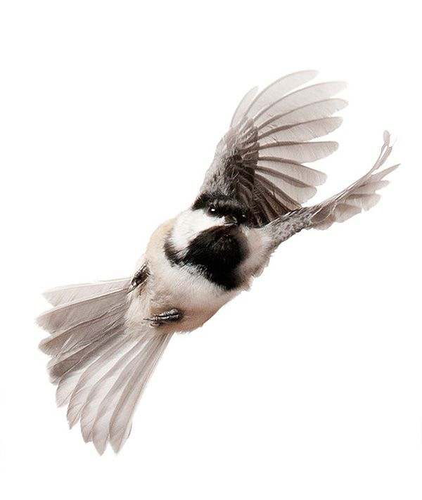 Captured in Mid-Air: This is What Small Birds Look Like in Flight
