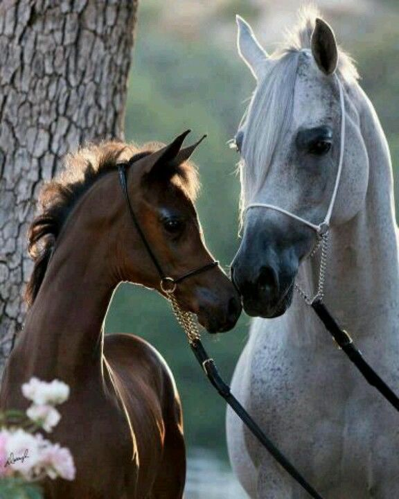 Lovely...... Mare and foal