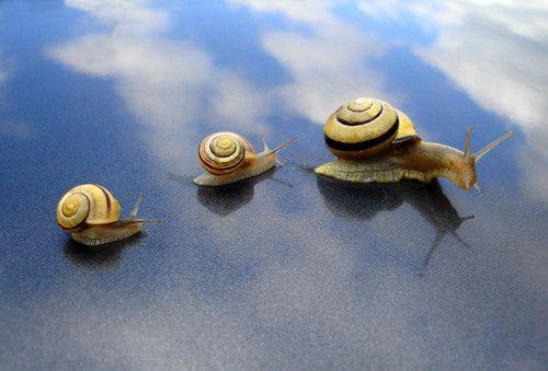 Snails by Jason Ozur