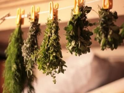 Récolter, sécher et stocker ses plantes médicinales ?