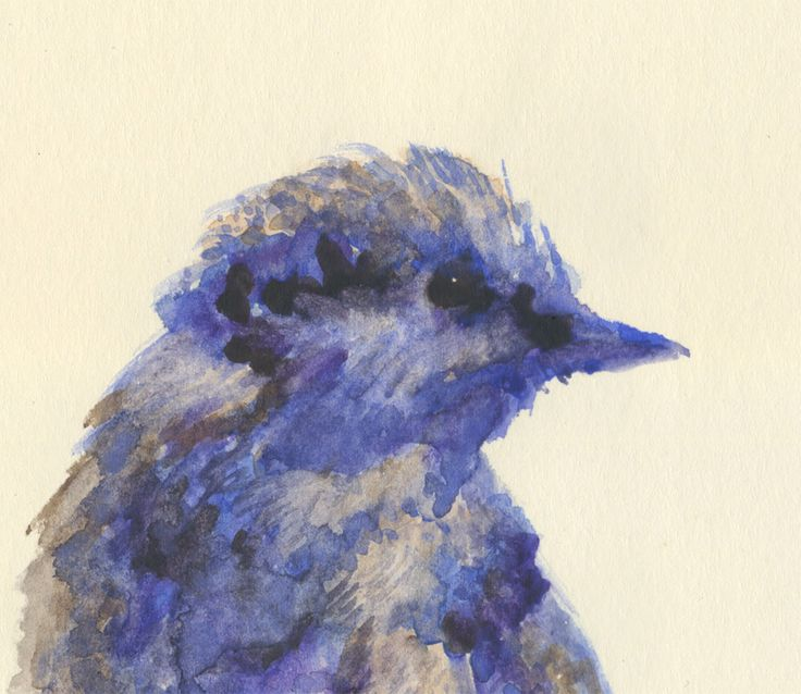 Detail, 'Arianna's Bird' (Erice, Sicily, 2013). Ashya Lane-Spollen #baaxart #ashyalanespollen
