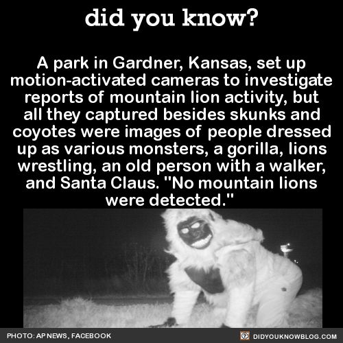A park in Gardner, Kansas, set up motion-activated cameras to investigate reports of mountain lion activity, but all they captured besides skunks and coyotes were images of people dressed up as various monsters, a gorilla, lions wrestling, an old...