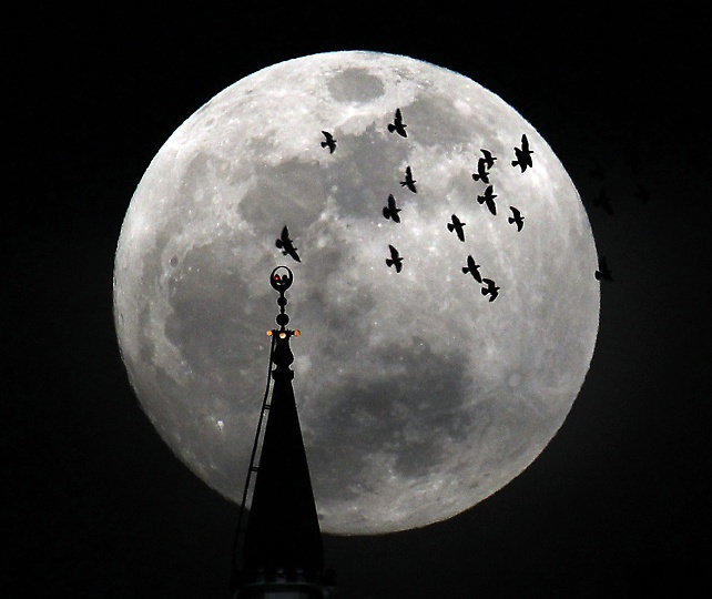 May 5th super moon in Mexico.  Beautiful: Birds Flying, Golf Ball, Mosques, Moon Rise, Super Moon, Fullmoon, Full Moon, Photo, Supermoon