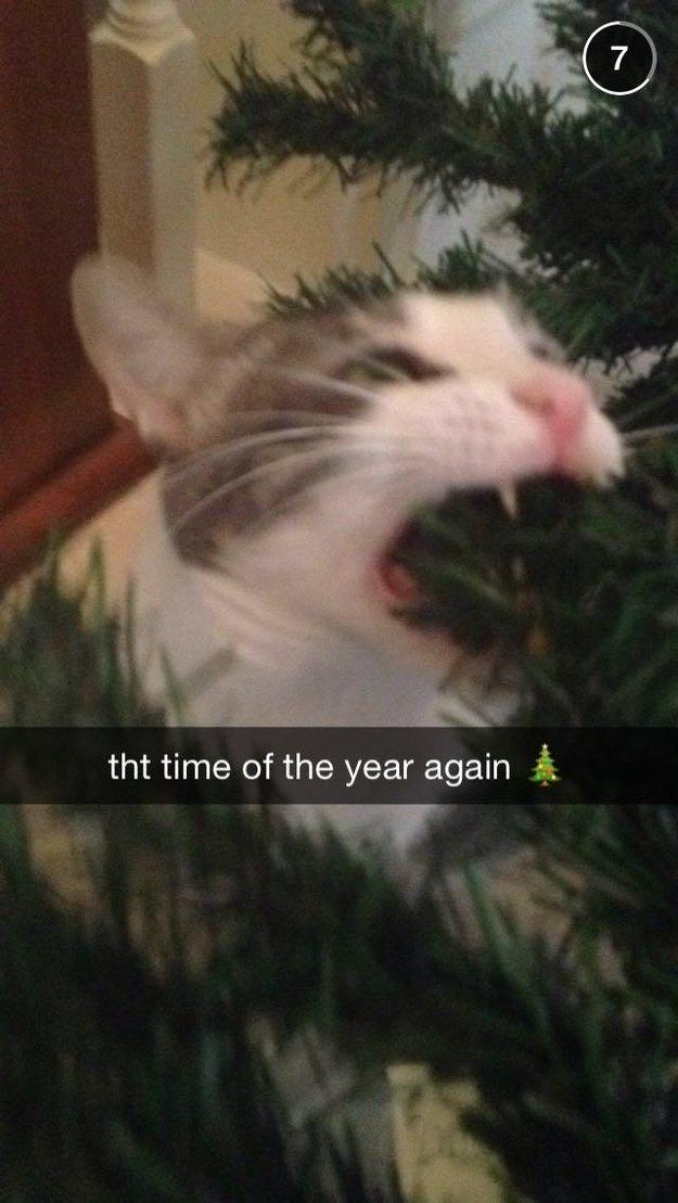 This grinch who does not care for your plastic pine tree. | 21 Animals Who Are Totally Nailing This Whole Christmas Thing
