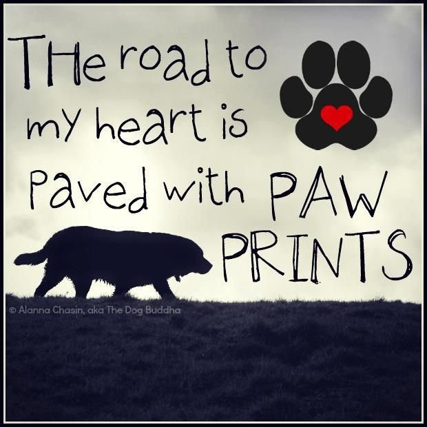 paved with paw prints