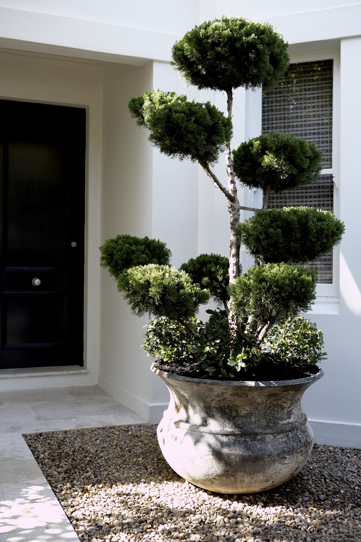 Garden Pots Australia 388 best outdoor containers and urns images on pinterest window bell pot double bay nsw australia anthony wyer associates anthonywyer workwithnaturefo