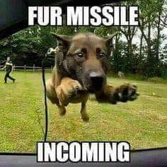 Fur missile incoming!!! #dogs #doglovers