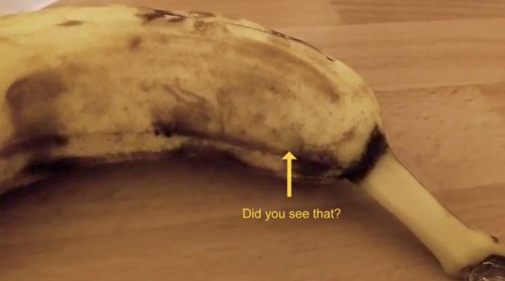 Ze wilde lekker die rijpe banaan eten...totdat de schil begon te bewegen. Wat eruit kruipt?