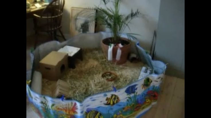 Child's pool guinea pig cage..large and cheap
