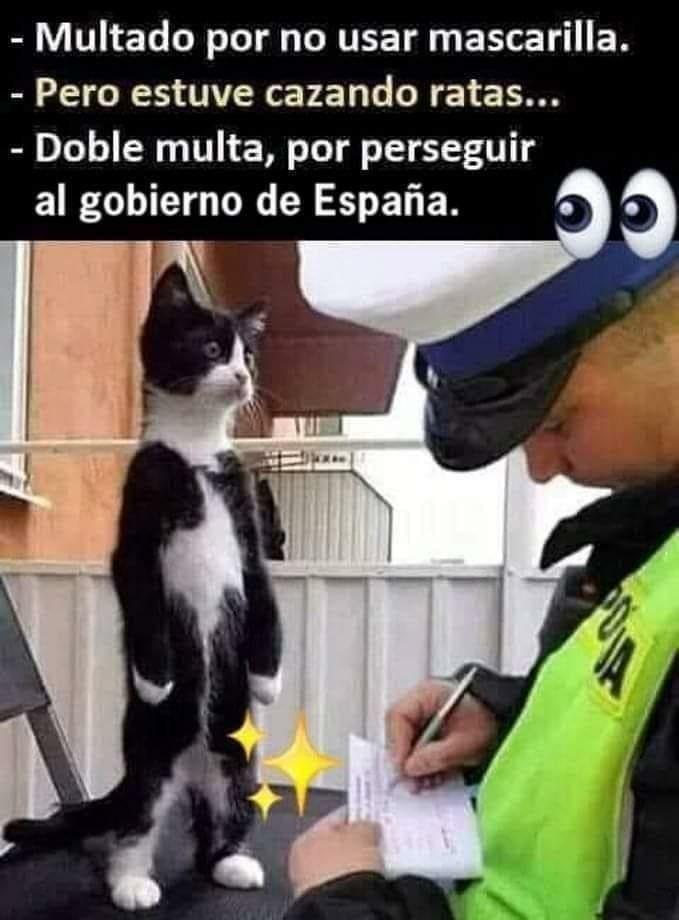 Pin De Rebeca Tamayo En Buenos Dias Buenas Tardes Y Buenas Noches En 2020 Humor Divertido Sobre Animales Memes Divertidos Memes Nuevos