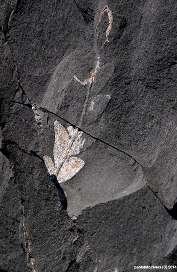 Sitio Paleobotanico de Los Molles, Cile, South America. Botanical fossil site, ferns.