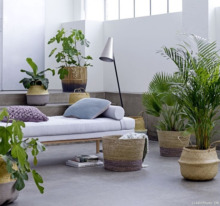 111 best Plantes du0027intérieur House plants images on Pinterest - hygrometrie ideale dans une maison