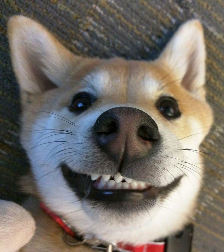 Best Website For Dog Medicine