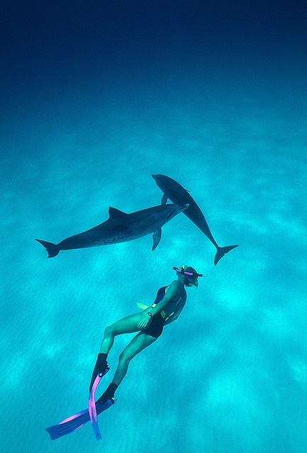 Two spotted dolphins escort a swimmer over the white, coral sand  bottom of the Bahamas Banks.