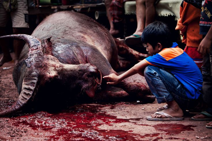 https://flic.kr/p/am2ER5 | slaughter [load 0] *vm18 | † Cruel images, the vision is not recommended for minors.   Funeral Capture [Tana Toraja - Sulawesi]  [ View On Black ]   ►  [Funeral Tana Toraja]   | Facebook |  Twitter | My Space | Dopplr | website | Director's Cut | Tumblr | gettyimages |   Please don't use this picture on websites, blogs or other media without my permission.   █║▌│█│║│█║mimmopellicola 2©11