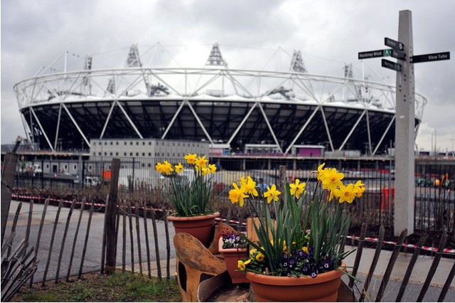 London 2012 Olympics daffodils.
