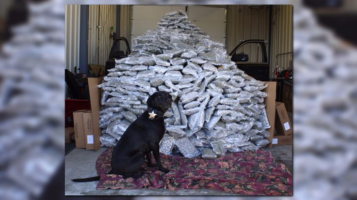 Idaho State Police recently seized nearly 400 pounds of marijuana during a traffic stop. Troopers said it is valued at over $1M.