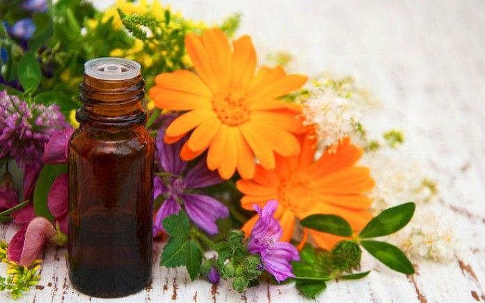 Velký bylinkový tahák: Rýma, kašel nebo chřipka? Vyzkoušej přírodní antibiotika! - obrázek 1