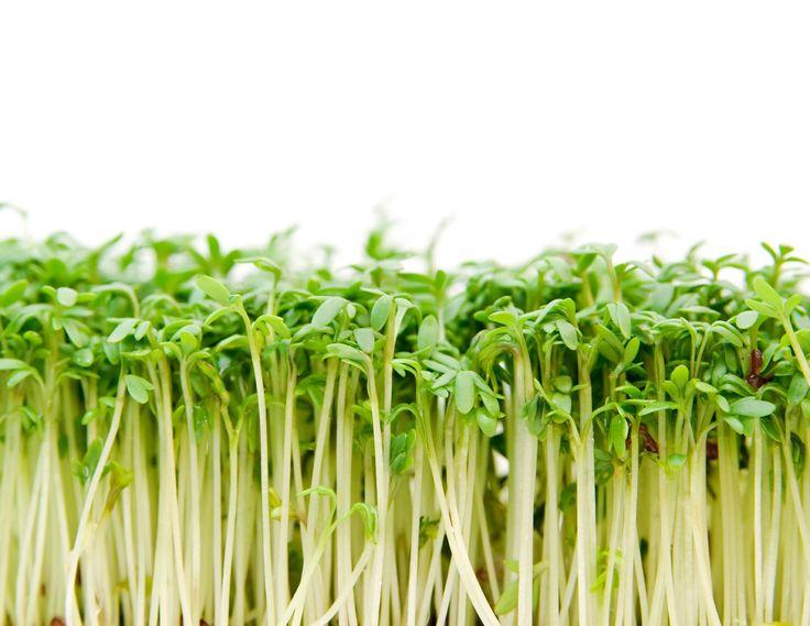 Ferro senza carne - Alimentazione Sana – Cucina Naturale
