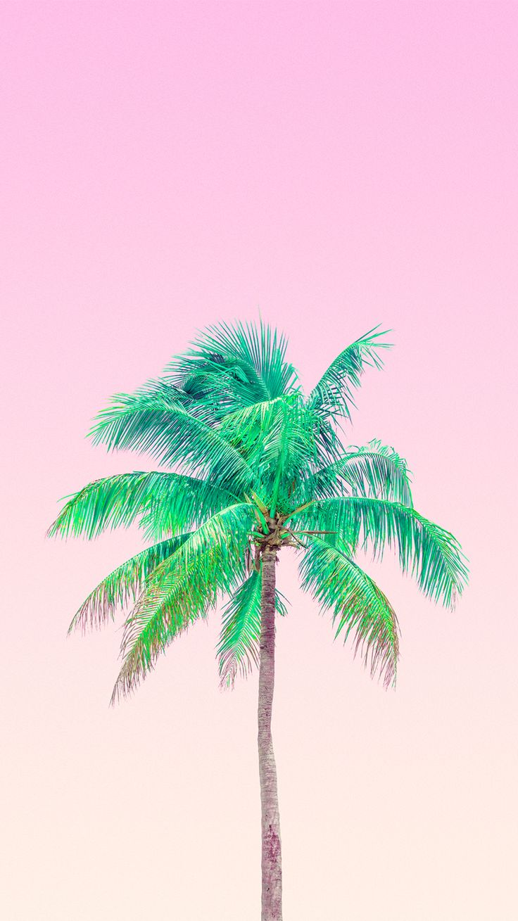 207 best palm trees images on pinterest backgrounds