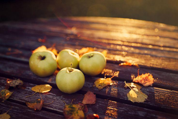Autumn Cozy : Photo