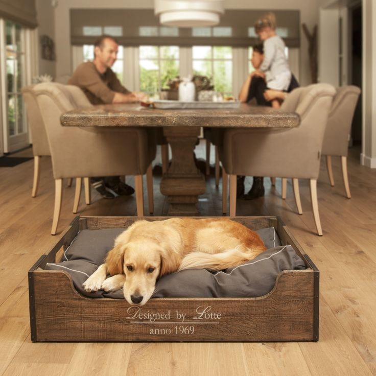 Lui is lekker! Slapen tot ik moe genoeg ben voor een dutje in mijn nieuwe hondenmand van Designed by Lotte.