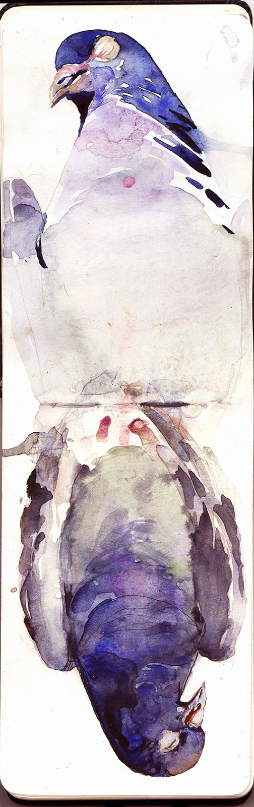 Connecticut watercolor artists directory - Benjamin Bjorklund Hommage To The Pigeon Who Hit My Window