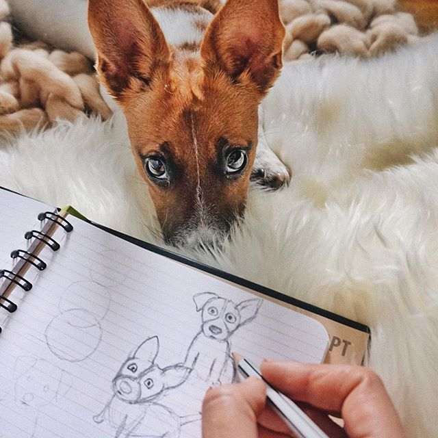 джек рассел терьер щенок jack russell terrier puppies  funny jrt дрт щенки рисунок art