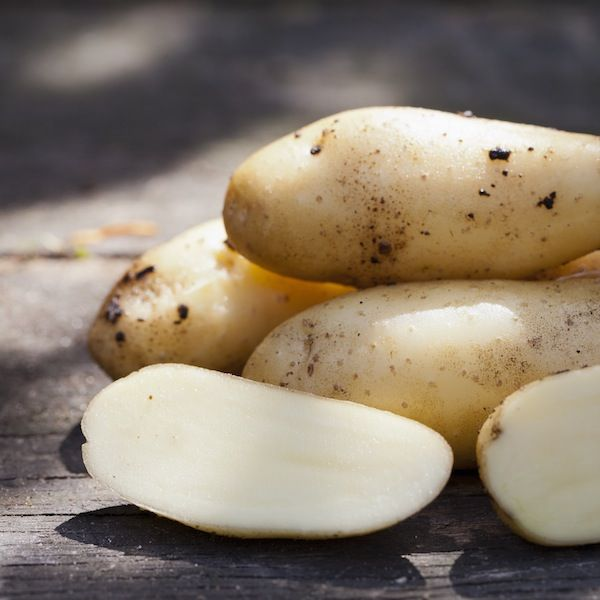 Sparrispotatis, Asparges, sättpotatis, höstpotatis