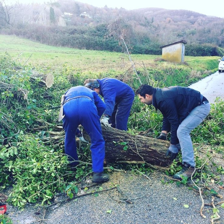 If a tree falls on your way? Nothing to worry about! Oliviero and Giovanni will clean the way in few minutes! Welcome to #Italy!   #instatravel #travelmemories #lifeofexploring  #browsingitaly #huntgramitaly, #exploringitaly #whatalyis #preylileitaly