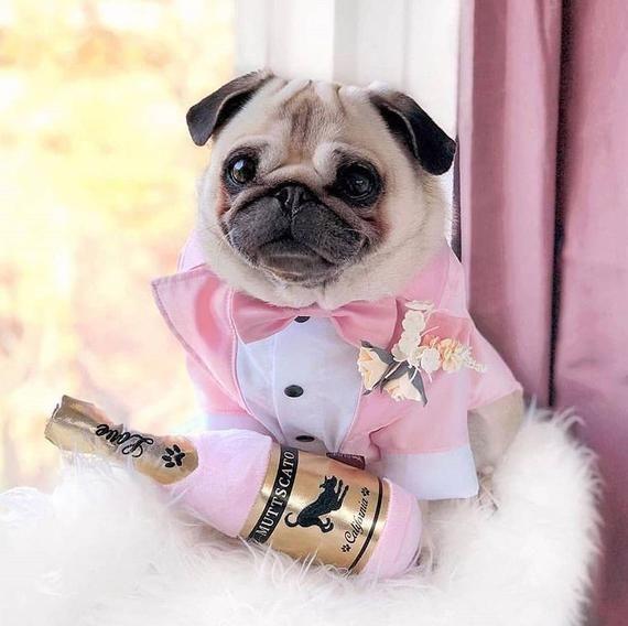 Classic Pink Dog Tuxedo Black Tie Dog Wedding Bow Tie
