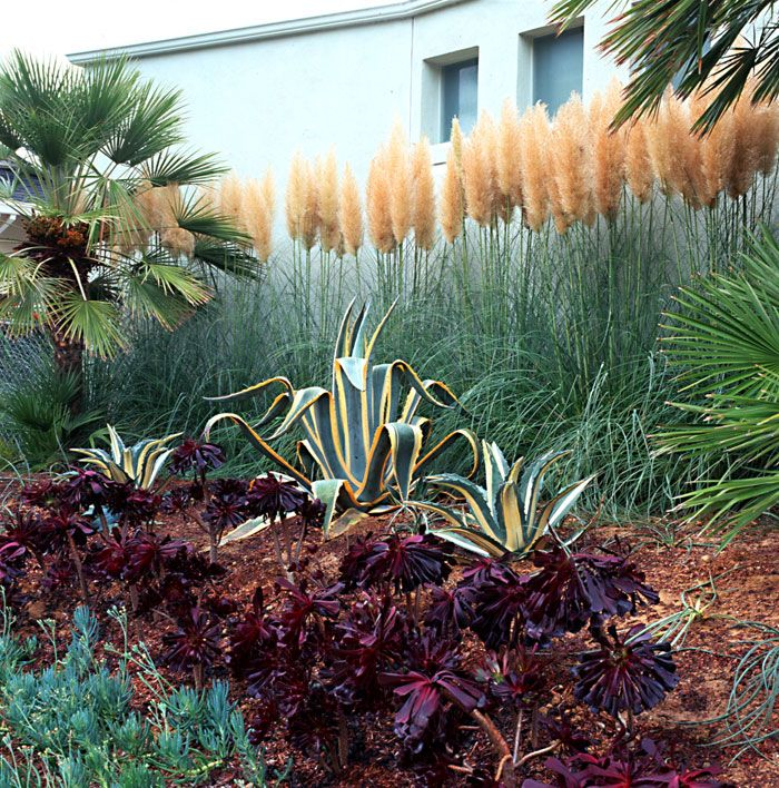 159 best images about the ornamental grass gardener on for Landscaping ideas with pampas grass