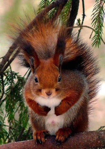 I've been putting these pictures of adventurous squirrels on my board, Wild?life, but I think I need a new board, Just Squirrels.