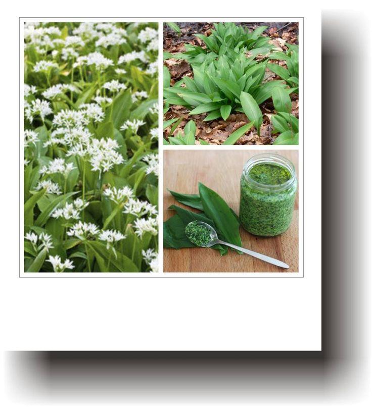 Plante medicinale – LEURDA