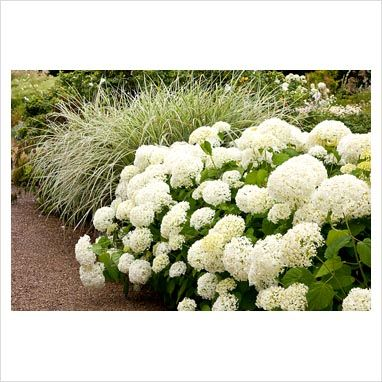 exterior house paint best 25 hydrangea arborescens annabelle ideas on 30544