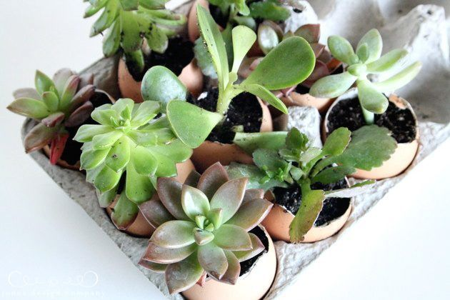 Springtime Succulents (planted in an unexpected way)