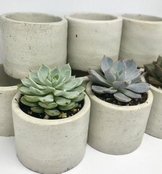 100 Concrete Succulent Planters 2 Inch Pots 2 Inch Succulent Pot Wedding Favors Succulent Favors Bulk Succulent Planters 2 In Planters Succulent Pots Succulent Planter Diy Succulents
