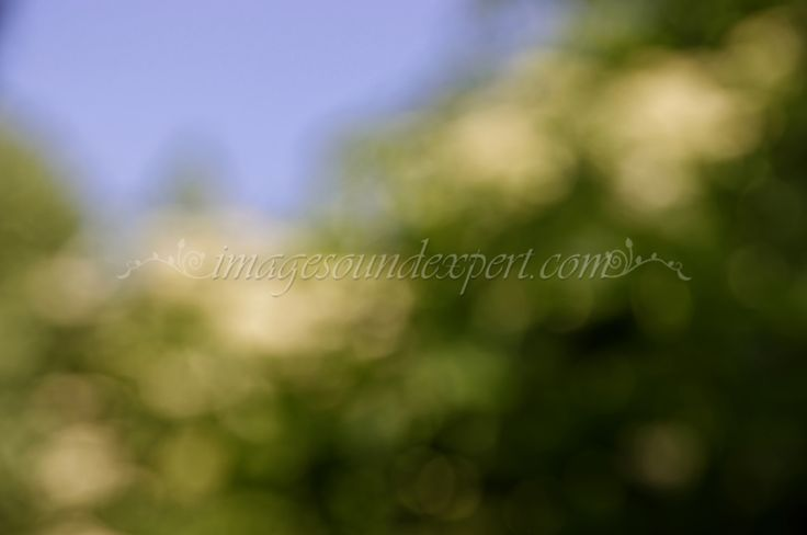 blur golden spring  background