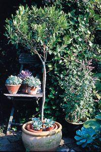 Site sur plante en pot plein soleil