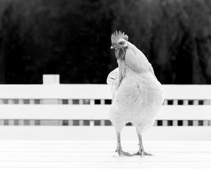 Prosjekt 365 / 4 #346 #onephotoaday #bw #bwphotography #farmlife photo @jorunlarsen