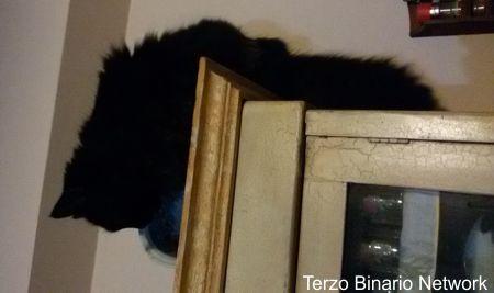 RECANATI (MC): SMARRITO MINU', GATTO PERSIANO NERO. RICOMPENSA http://www.terzobinarionetwork.com/2015/12/recanati-mc-smarrito-minu-gatto.html