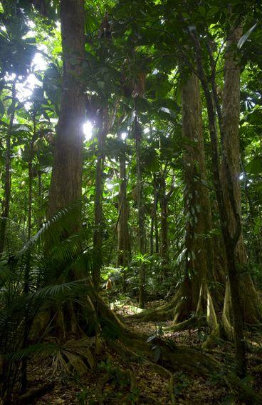 Daintree Rainforest so... Beautiful!