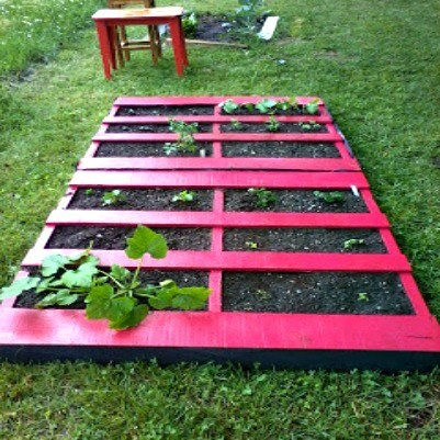 Painted pallets as garden dividers grow pinterest for What to grow in a pallet garden