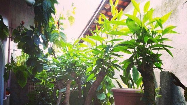 Las plantas son reconocidas no sólo por su belleza sino por sus cualidades como protectoras de tu espacio. Aquí te decimos por qué.