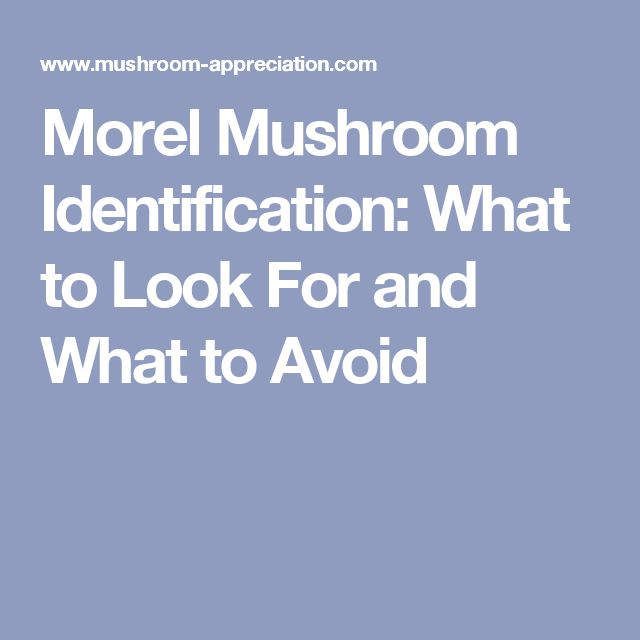Morel Mushroom Identification: What to Look For and What to Avoid