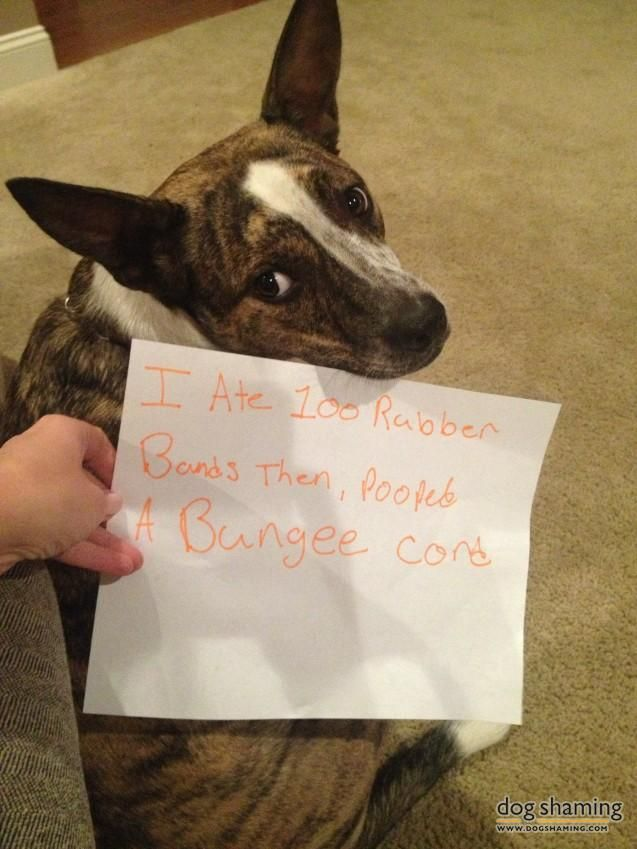199 Best Images About Dog Shaming On Pinterest My
