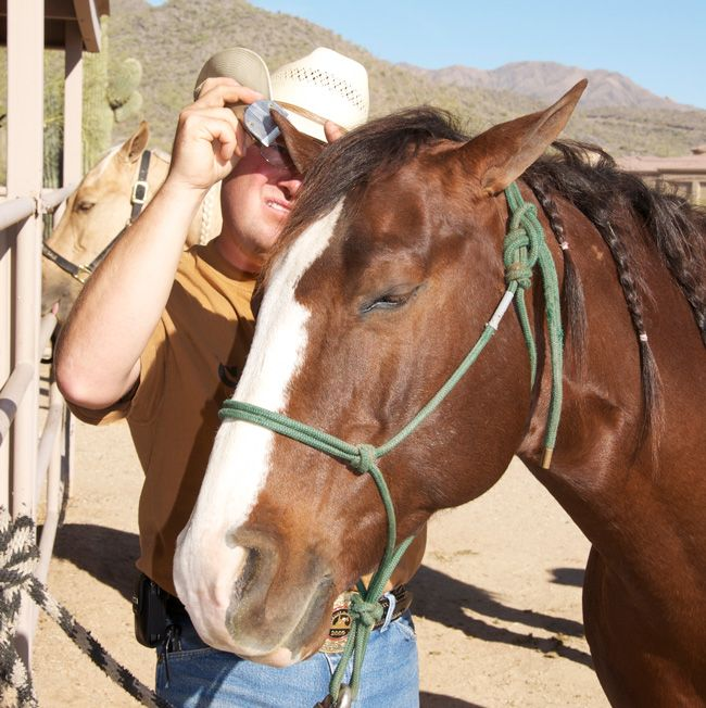 Clipping tips from professional, Clay Webster. (How to Clip 101). My Stable Life blog.