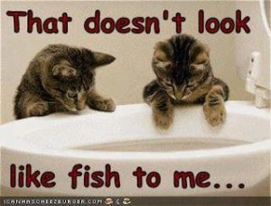 Fishing can be tricky..: Funny Image, Funny Pics, Animal Jokes, Funny Cat, Funny Pictures, Hilarious Pictures, Funny Stuff, Pet Pictures, Funniest Pictures